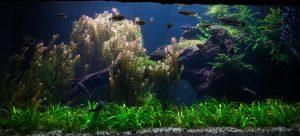 Aqua Plants vs. Garden Plants