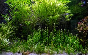 Aquascape in the Philippines