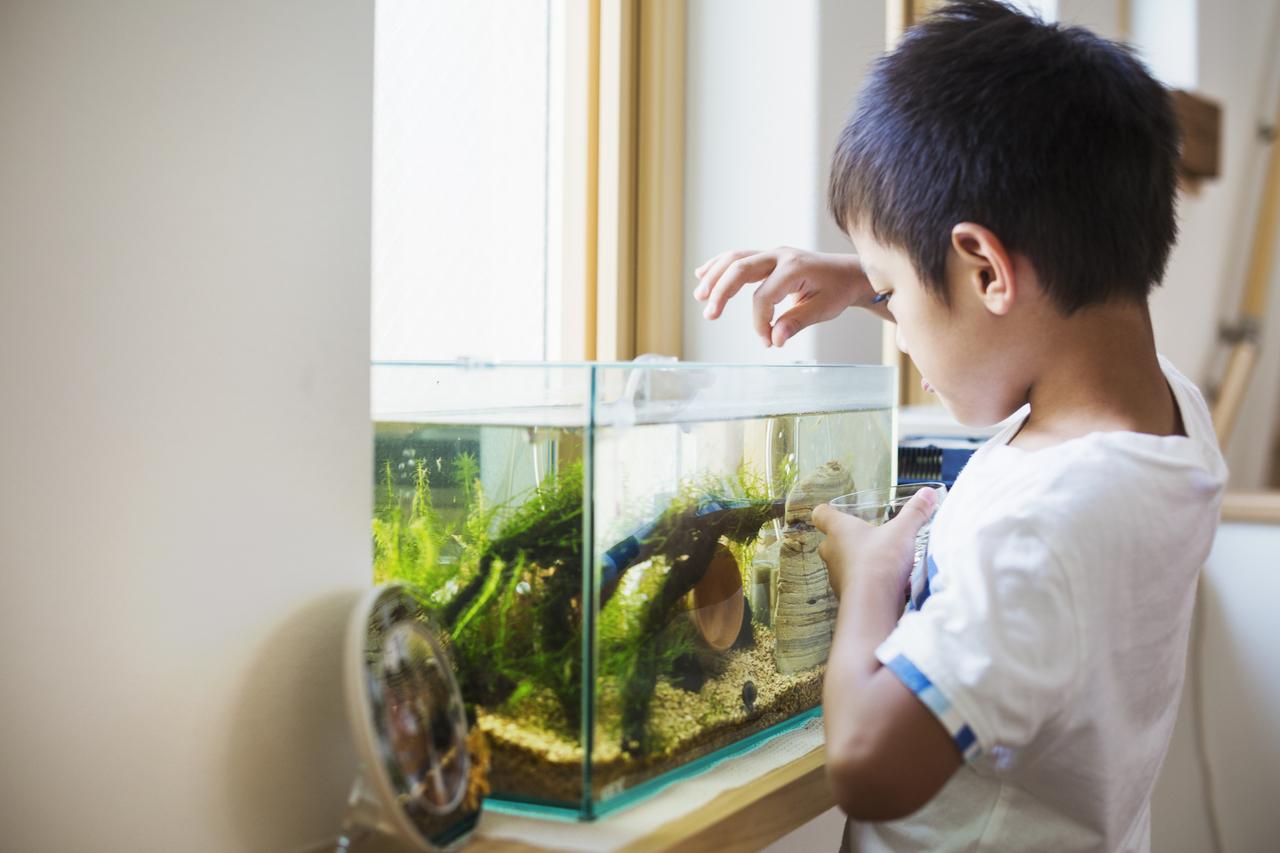 A little boy feeding his fish