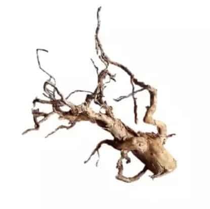 Tweety Wood