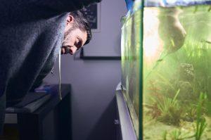 How To Keep My Aquarium Algae-Free