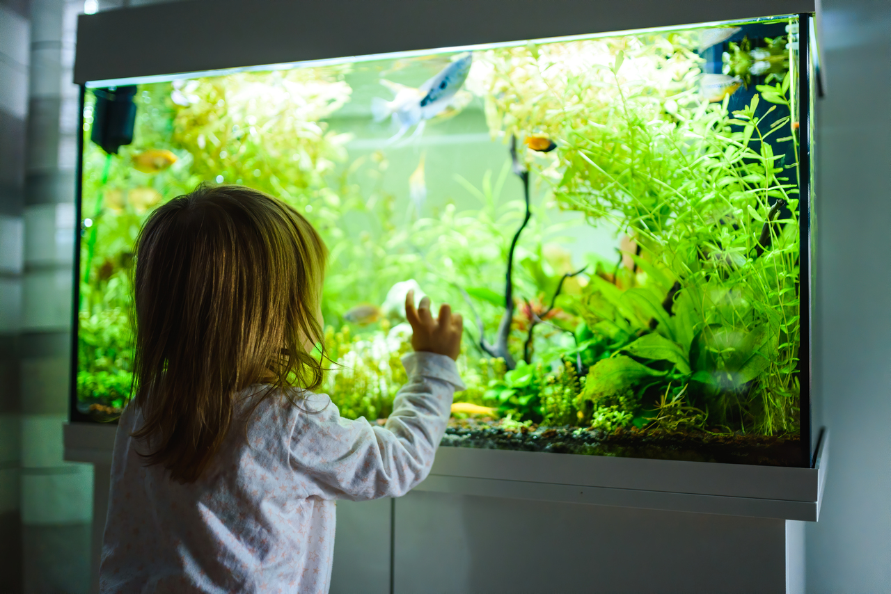 A child staring at an aquarium with a filter