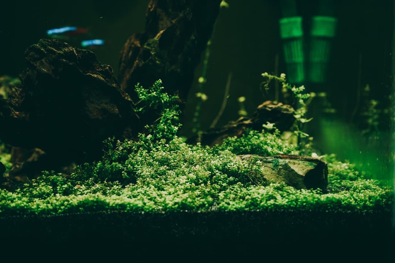 Aquatic plants absorbing nutrients
