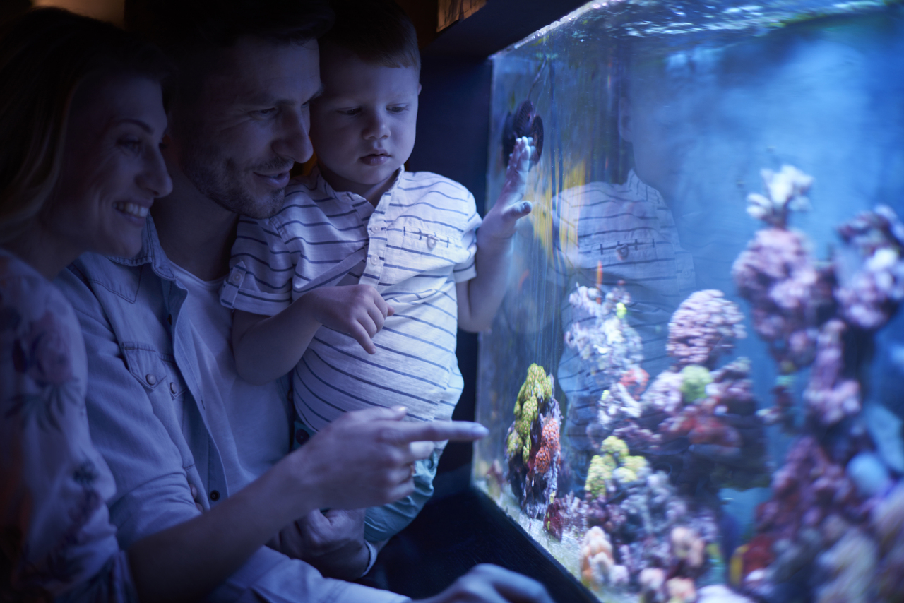 A family looking at their aquarium in the dark