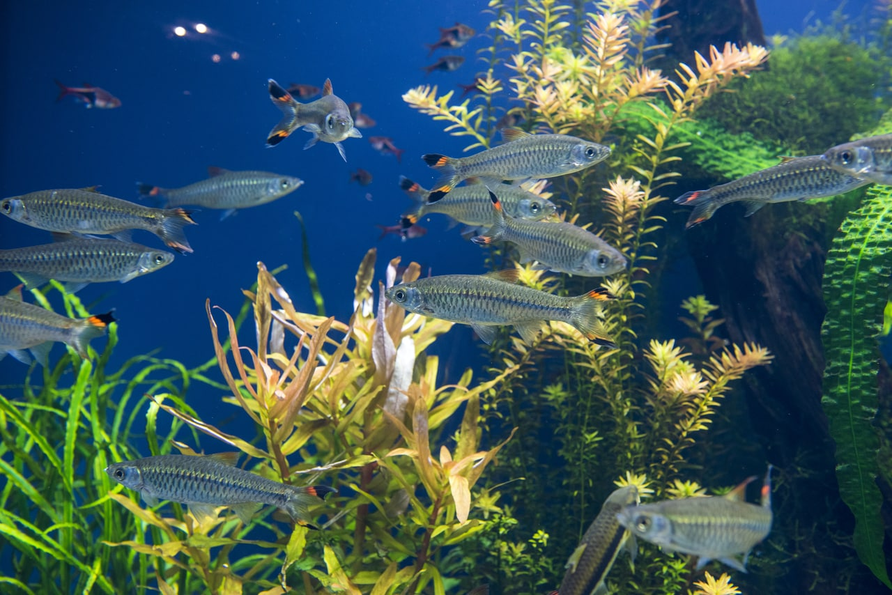 Additional Food Sources for Fish