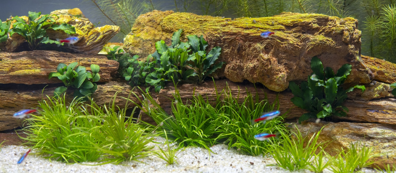 Nutrients Your Aquatic Plants Need