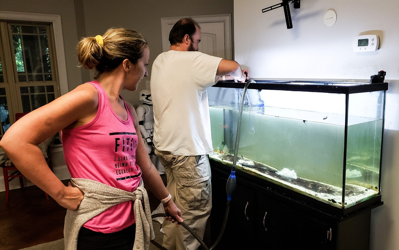 Maintain Your Aquarium