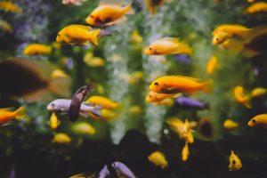 How To Fix Cloudy Aquarium Water