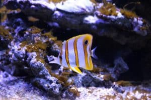 What are the Different Types of Aquarium Substrate in the Philippines?