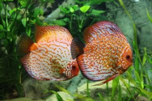 Aquatic Plants That Can Live And Thrive Without CO2
