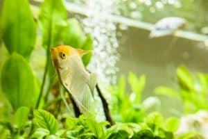 5 Easy Aquarium Plants for Beginners