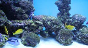 6 Best Tips For Aquarium Hardscaping