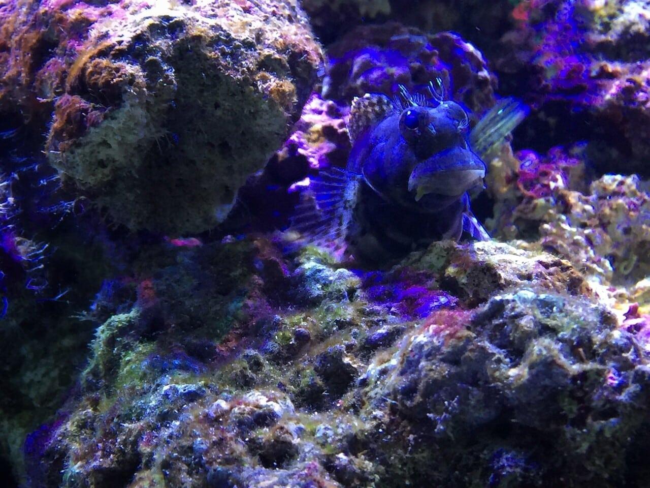 Mimics The Natural Habitat Of Fishes