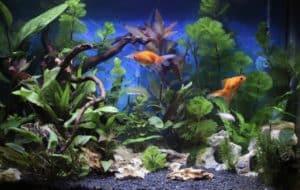 7 Benefits Of Using Seiryu Stones in Your Aquarium