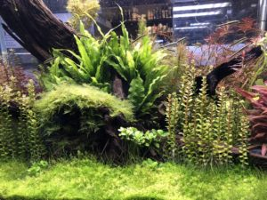 6 Tips on Having A Lush Planted Aquarium