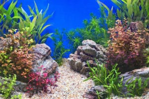 7 Things You Need To Know About Maintaining Your Aquarium's pH Level