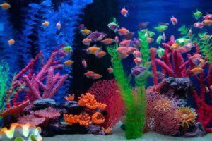 A Guide To Proper Aquarium Oxidation